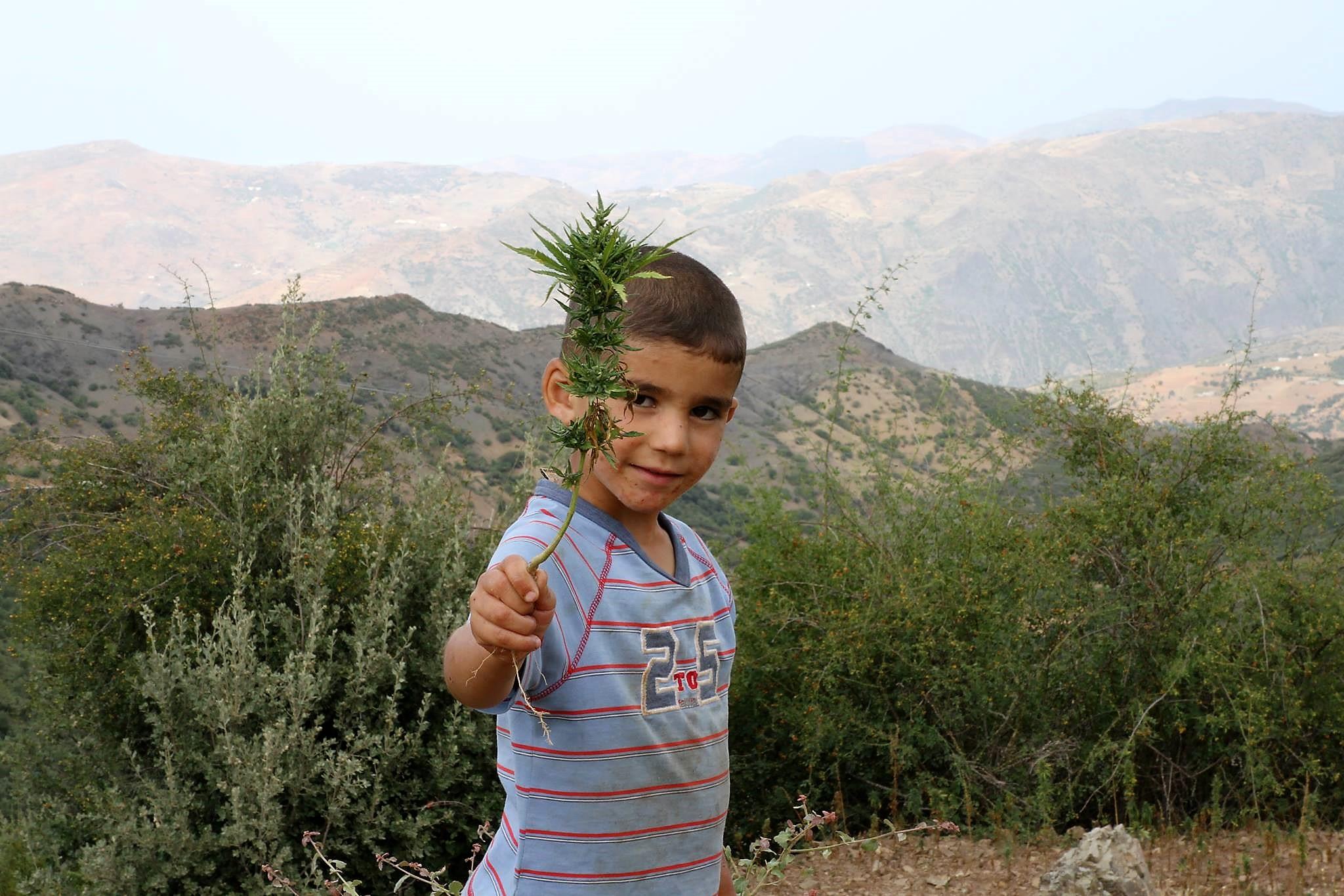 Un Flor por la Paz